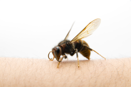 Why Insect and Animal Bites Call for Urgent Care and Attention